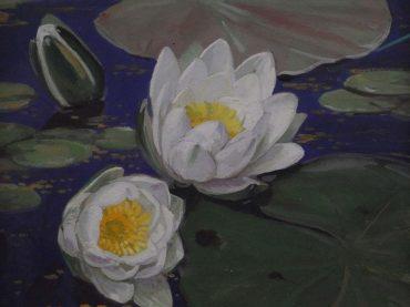 A.J. Meijer-Smetz - Waterlelies